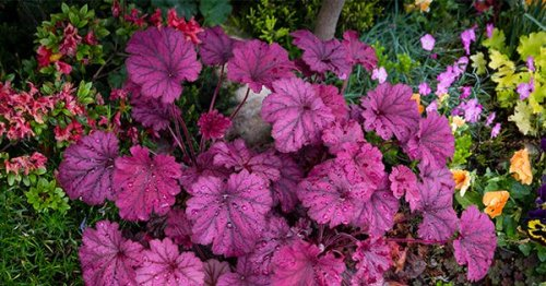 The 14 Best Plants with Pretty Foliage (Because Flowers Don't Deserve All the Attention)
