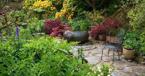 15 Shade-Loving Plants That Will Brighten Up Your Outdoor Garden