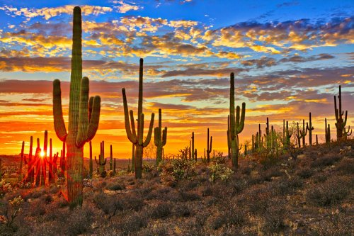 Introducing Arizona's national parks and monuments