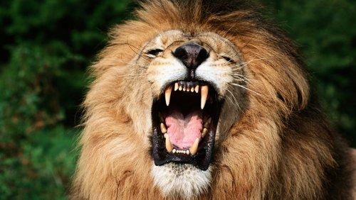 Top 10: World's most dangerous animals