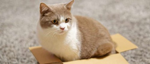 """The """"If I fits, I sits"""" instinct: Cats will sit in a box even it's an illusion (cat pics inside)"""