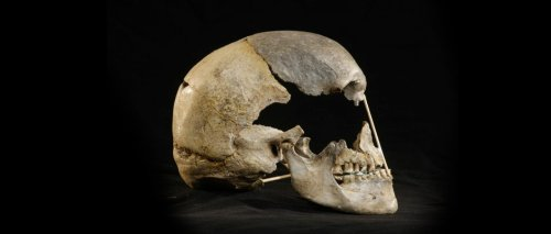 45,000-year-old female skull offers 'oldest modern human genome'