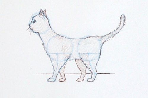 How to draw a cat: easy step-by-step guide