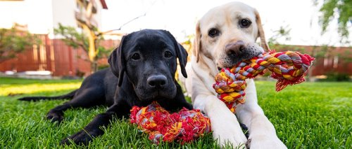 The science of dogs: Everything you need to know about your best buddy