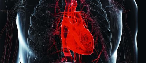 The surprising science of why your heart doesn't tire like other muscles