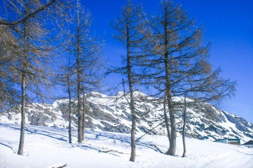 Winterwanderung auf der Tauplitzalm - Immer auf Reisen