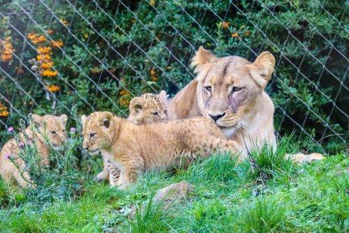 Zoopark Erfurt – Wilde Tiere entdecken
