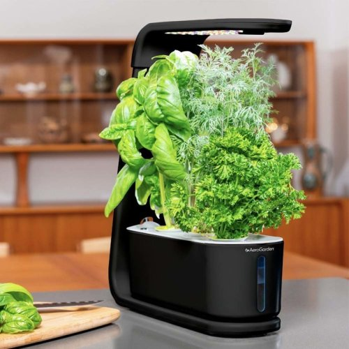Grow your favorite herbs with the AeroGarden Sprout on sale for $60 today