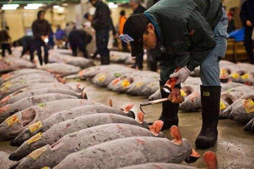 Dalle acque di Fukushima oltre 21 mln di kg di pesce arrivano in Italia