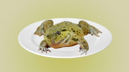Does 'Eating the Frog' Still Not Work for You? Try Focusing on 'Big Rocks' Instead