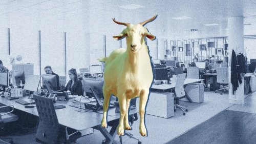 The Dumbest Motivational Stunt of All Time? When the Owner of the Phoenix Suns Put Live Goats In an Employee's Office