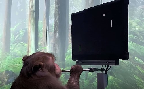 Elon Musk's Neuralink shows a monkey playing Pong with its mind