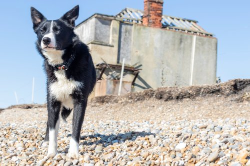 Sheepdog finds his sea legs after starting job with ferry commute