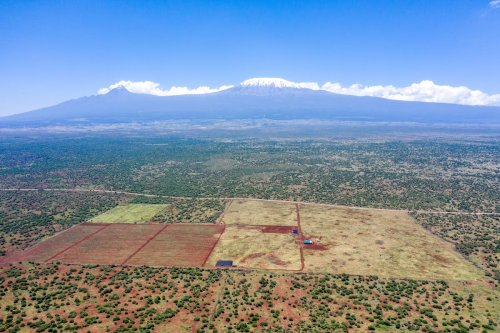 Kenyan avocado farm could spell disaster for elephants