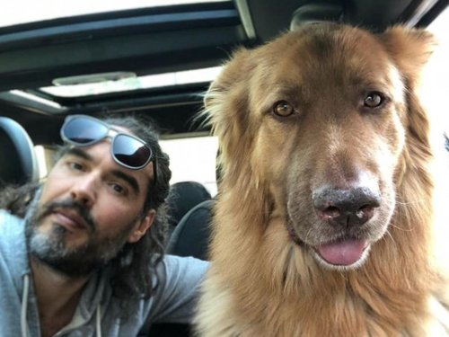 Russell Brand 'devastated' after his dog mauls a wallaby to death