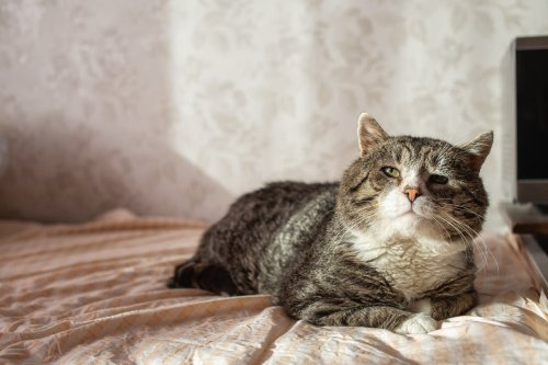 Want your cat to show you more affection? This is what the experts say you should do