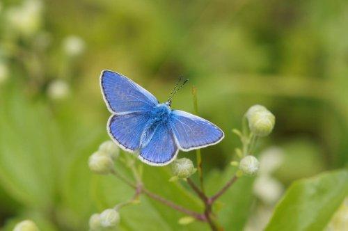How to help butterflies thrive in your garden