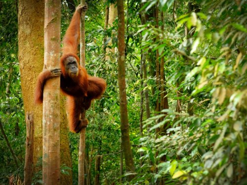 Everyday shopping from brands like Heinz and Yakult helps destroy rainforests, report says
