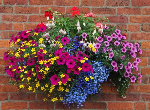 How to make hanging baskets out of throwaway junk