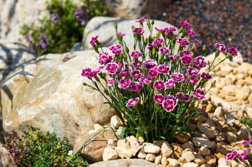A garden designer explains how to reuse old concrete, paving slabs and poor soil to create a beautiful garden