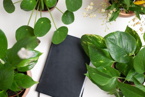 Returning to the office? These are the houseplants to take along
