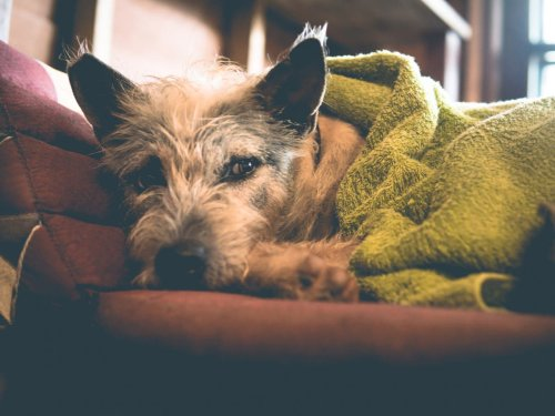 How to keep pets calm in thunderstorms