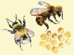 Discover honey bee