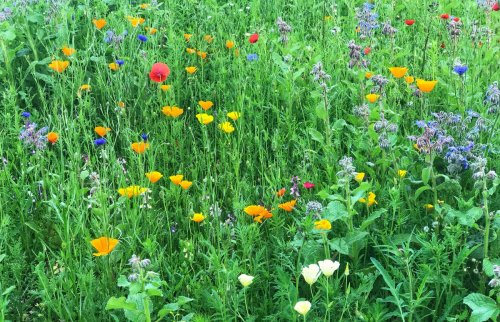 How rewilding can boost your garden – and your life