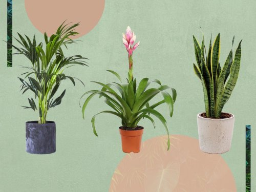 The best house plants to spruce up your living space