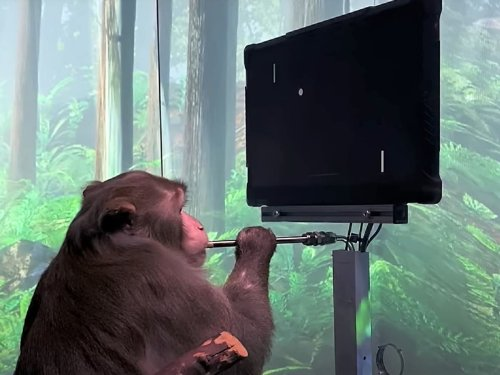Elon Musk just shared a video of a monkey playing video games with its mind