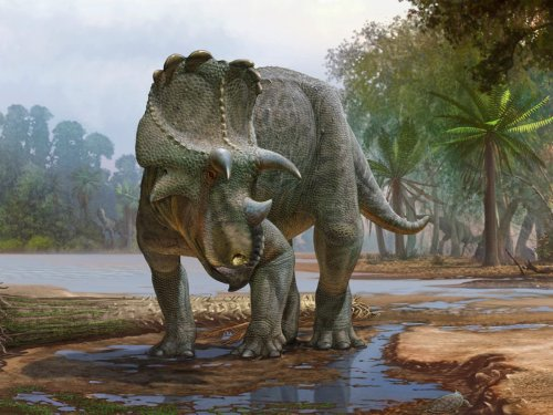New horned dinosaur found in US was ancestor to triceratops