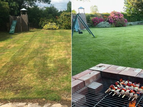 How I rescued my lawn – but ruined my life | Tom Peck