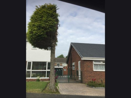 This tree perfectly sums up 'British pettiness' between neighbours