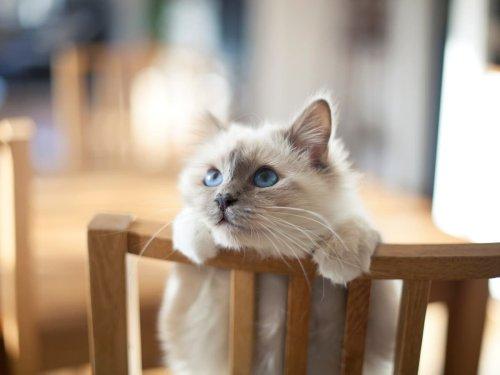 British retailers recall cat food over 130 cat fatalities