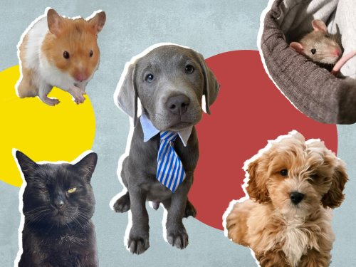 'I don't want to go anywhere without Alfie': What the future holds for our pandemic pets