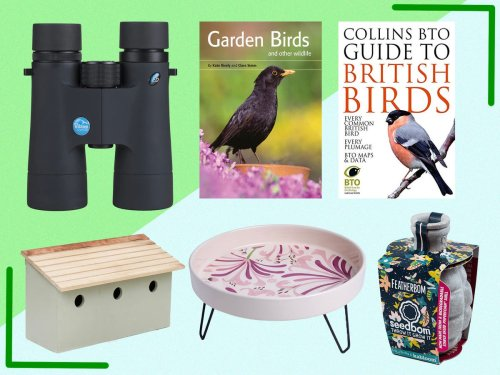 How to make your garden a haven for birds, according to the experts