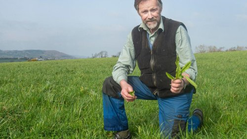 Brexit leaves farmers without grass seed