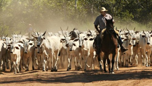 Brazil's JBS bought 301,000 cattle from 'irregular' farms in the Amazon, audit finds