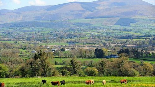 Keeping it in the family: the inheritance tax relief that can save farmers up to €100,000