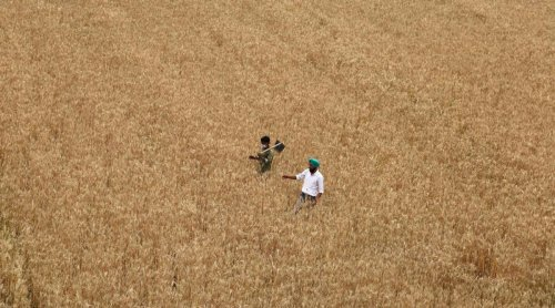 Rollback of fertiliser price hikes unlikely as Centre keeps subsidy rates unchanged