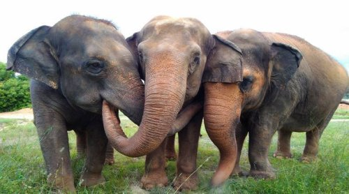 Since Jharkhand's creation, 1,405 people and around 80 elephants killed in human-animal conflict