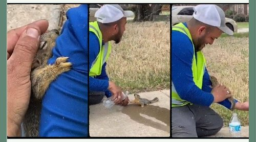Heartwarming video of man helping thirsty squirrel drink water from bottle goes viral