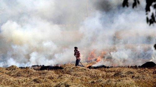 'Punjab, Delhi, Haryana & UP govts have prepared action plans to check stubble burning'
