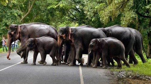 Chhattisgarh: Pregnant elephant among two found dead