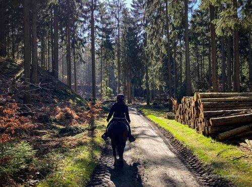 Deister: Wanderung zum Taternpfahl ab Steinkrug I indigo-blau.de
