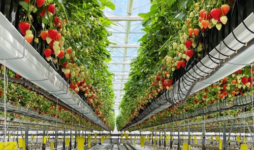 Why food could be the next focus for green investors