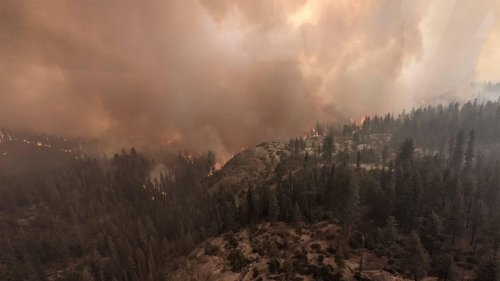 Californian wildfires threaten the world's largest tree in Sequoia National Park