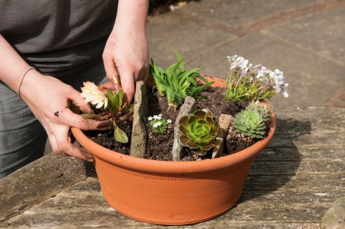 Spruce up greenhouses and consider rock plants in the garden this weekend