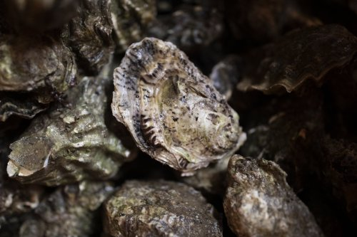 From Masterchef to Aldi, oysters are having a moment - here's how to eat them