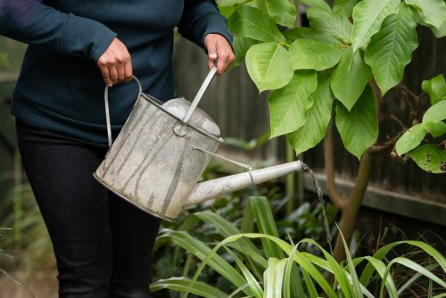 Gardening jobs for the weekend - including knowing when to water plants in the scorching heat